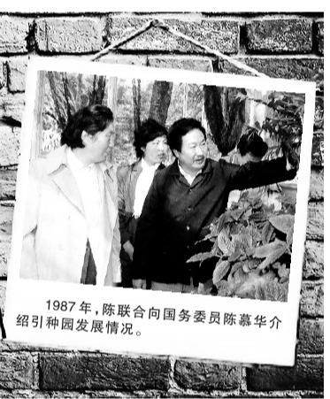 1987年,陈联合向(时任)国务委员陈慕华介绍引种园发展情况。