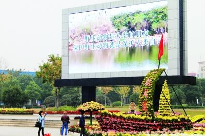 昨日,东西湖区吴家山五环广场,户外大型电子屏滚动播放环保知识,使