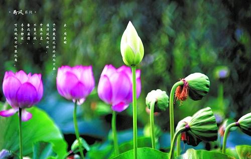 本报讯 11月15日上午,王流章摄影艺术展暨兼职教授受聘仪式在郑州大学美术学院举行。