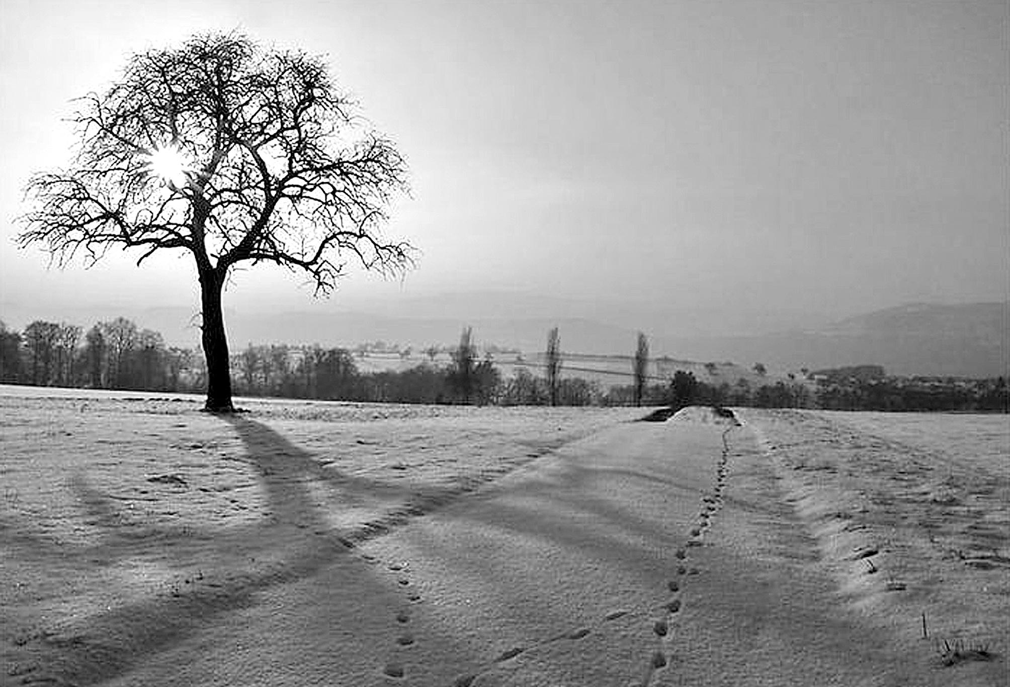 冬天唯美意境; 冬天唯美意境_唯美意境_唯美意境图片_银澜手机图片