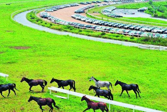 作为亚洲最大的赛马场,位于南京东郊的南京国际赛马场呈现与其名