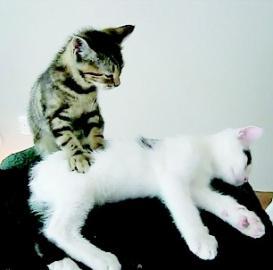 """小猫""""按摩""""师(图)"""
