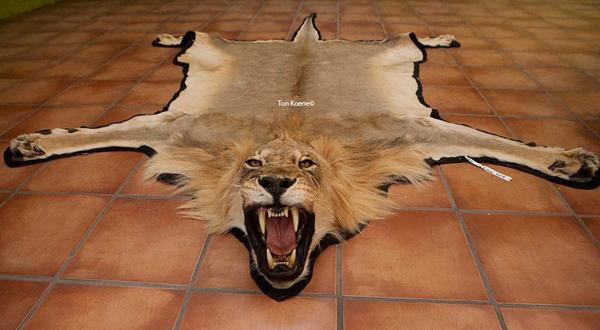 人与兽1715ia{0_如今,被塑化被装裱的标本,挑战着人们的承受极限.