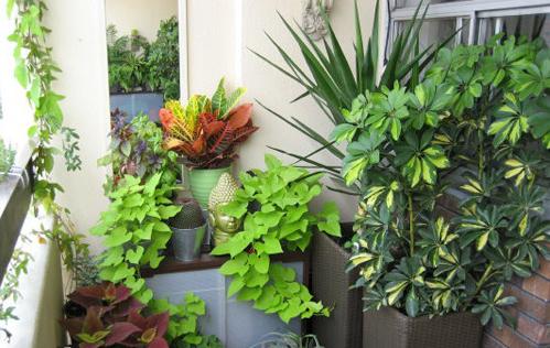 阳台搭配tips:通过多类型植物营造差异美感,是这款阳台花园所