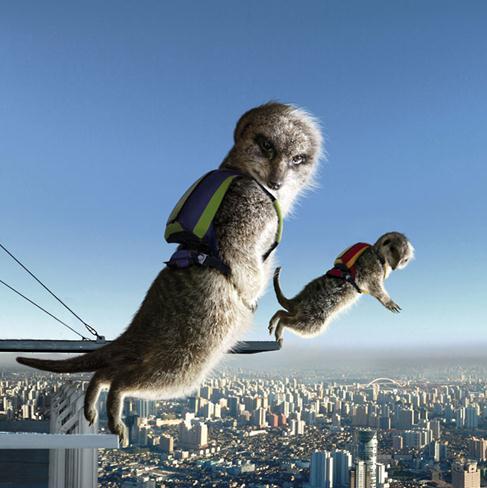 超帅气动物日历 猫鼬挑战极限玩滑板-搜狐女人