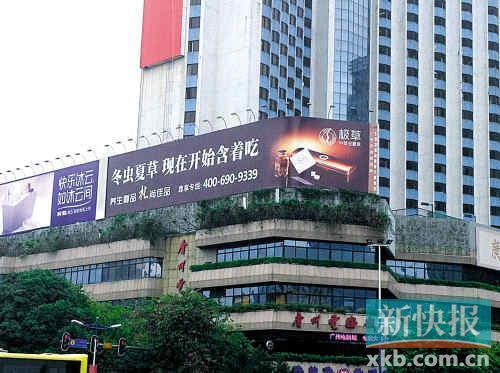 广州最繁华的天河体育西路上,面对体育中心的位置树立着硕大的极草广告牌。见习记者柯强/图