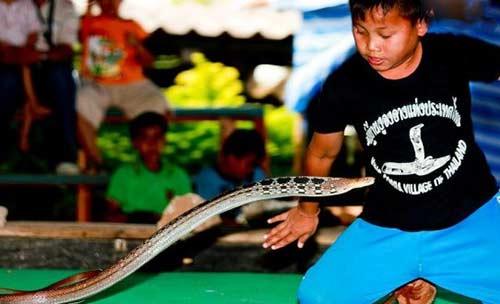 养蛇是村庄里人的乐趣