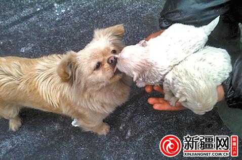 """忠犬""""来福""""亲吻它的两个孩子"""