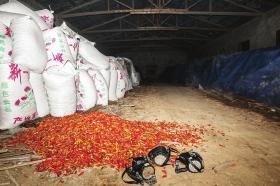 12月13日,长沙县跳马镇白竹村,非法使用硫黄熏制干辣椒的加工厂里,工人工作时都戴着防毒面罩。