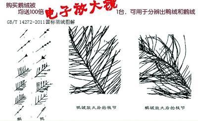 """鹅绒比较偏白色,绒长,并且绒朵大,明显成""""朵""""(大图为显微镜下的鹅绒)"""