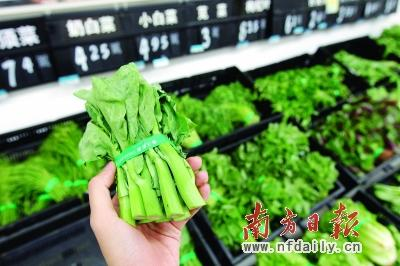 近段时间,叶菜价格不断高企,这让市民直呼吃不消。 南方日报记者 周游 摄