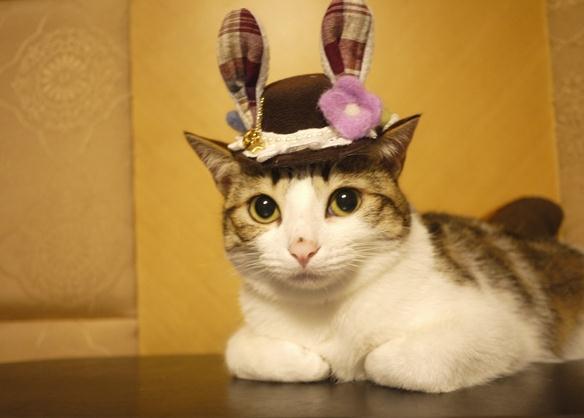 萌宠 小猫 卖萌手绘