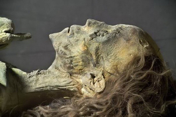 埃及泰雅王后的头发