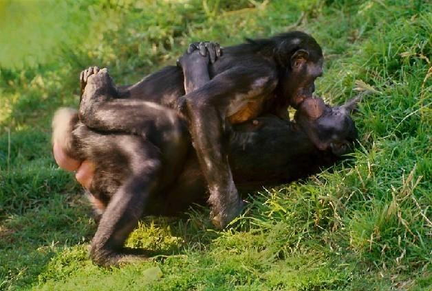 欧美人与动物兽交_性的本质展览:揭秘千奇百怪的动物性行为/图(1)_科学探索_光明网