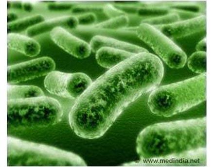 法国鲁昂大学的研究人员近日发现胃肠道细菌具有控制寄主的食欲的作用。