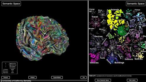 美国研究人员使用功能磁共振成像(fMRI)绘制了大脑处理不同信息的区域(图右),之后以虚拟3D大脑区域结构呈现(图左)