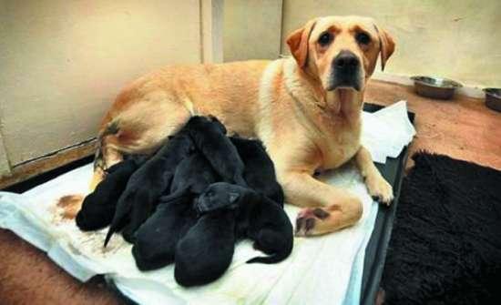 """露西/英雄妈妈""""露西""""和它的黑宝宝们。"""