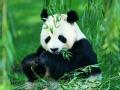 中国珍稀物种