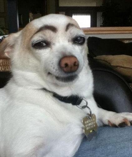国外网站评选最搞笑动物照