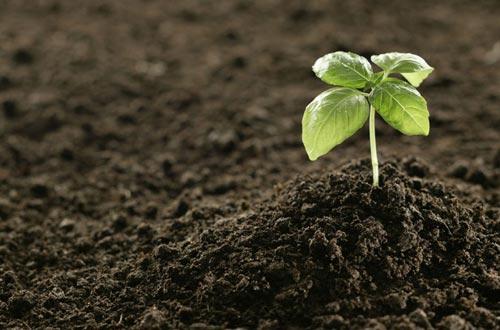 土壤 上面 是 植物 下面 则 是 分解 和 净化 我们 的