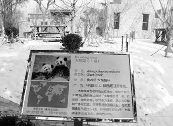 """济南动物园大熊猫馆亮""""招牌""""(图)"""