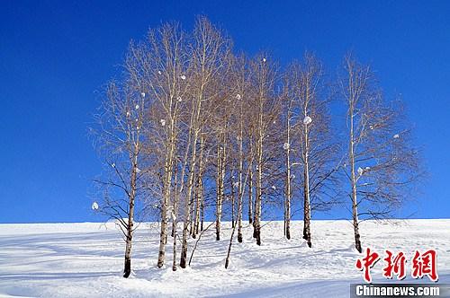 光秃秃的树上,挂着如果实一般的雪球。马新龙 摄