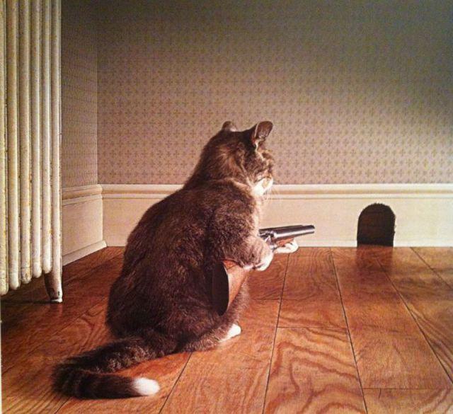 当猫端起枪对付老鼠 爆笑动物界上演喜剧(组图)