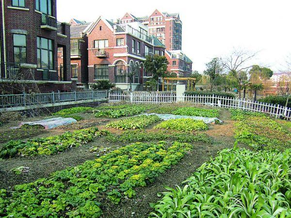 别墅区的v景观景观成了菜园子手绘用地别墅