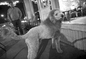 小狗剪成狮子发型路人误认电话报警(图)图片