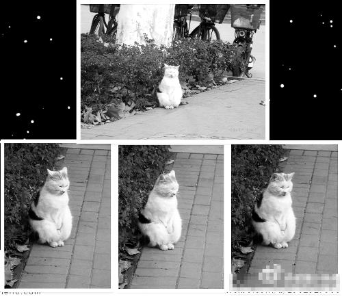 """猫为啥搓""""顺手"""",卖萌呗"""