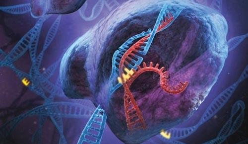 科学家使用细菌改变人类dna结构取得成功 搜狐it