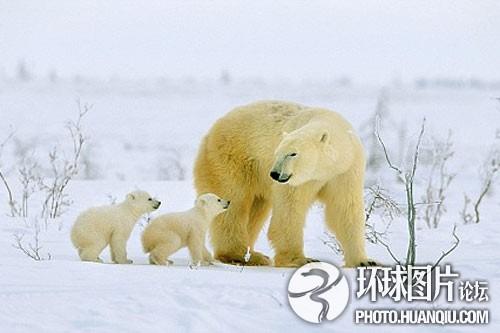 苍蝇环境污染残杀的心酸悲剧北极熊导致全球(幼仔)上海有哪些组图火锅店图片