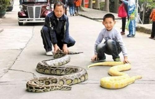 遛蛇哥养蟒19年 看与蛇有