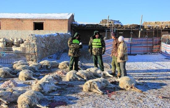 公安边防民警在阿巴嘎旗吉日嘎郎图嘎查牧民家的狼袭现场做笔录。