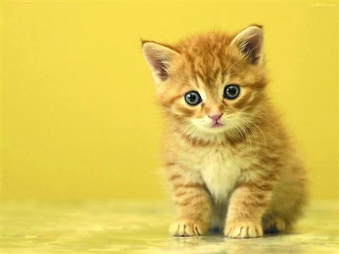 WWW_5542_COM_一只小猫打败一组专家(图)