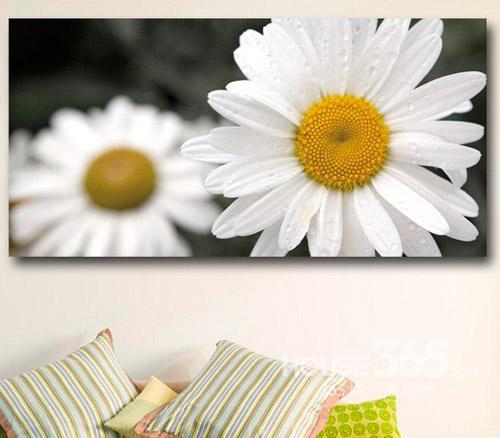 手绘装饰画图片:白色雏菊大型花朵高清照片,源自欧洲设计师,高质量