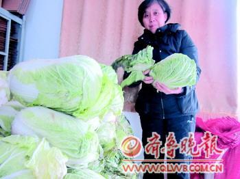 李芳莲女士捐千斤有机大白菜(图)-搜狐滚动