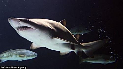 英国一海洋馆清理水池 发现上万颗鲨鱼牙(图)图片