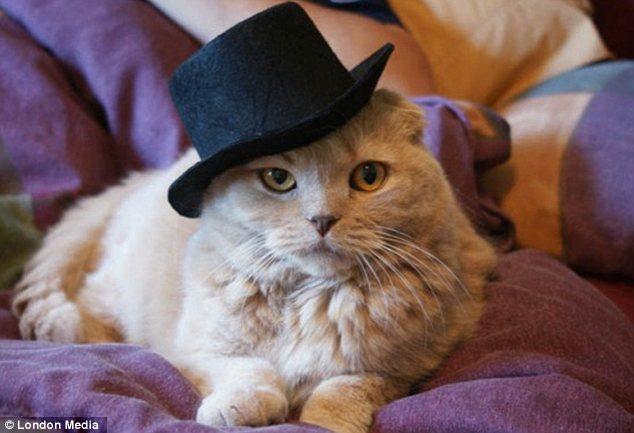 從照片中可以看到,這些小貓明顯對自己所佩戴的這些時髦的裝飾很滿意.圖片