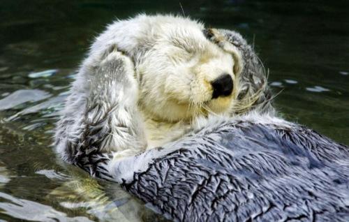 躺/�ij�{��j8�Nh@_动物园水獭躺水中撒欢 双爪捂眼超萌表情(多图)