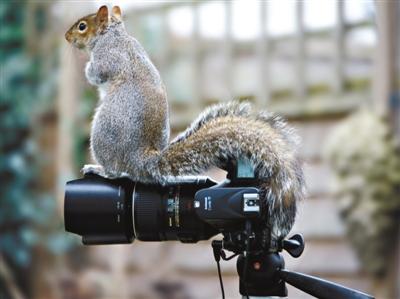 """""""占领""""照相机的可爱动物(组图)"""