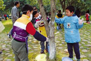 少年儿童公园桂花树认养活动报名开始(图)