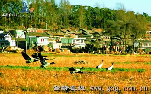 爱鸟护鸟意识逐步提高,人与自然相处日益和谐