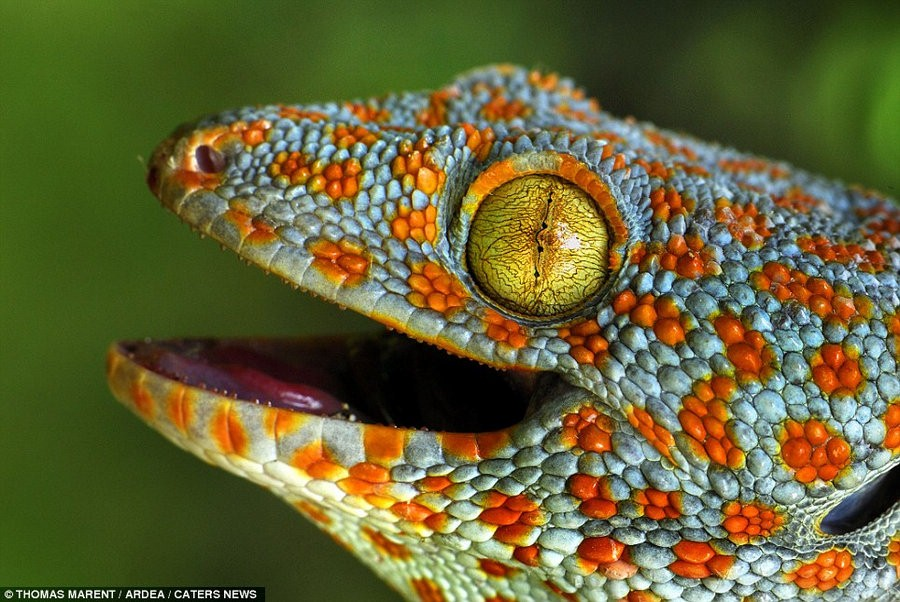抓拍全球大自然中颜色最鲜艳动物(组图)