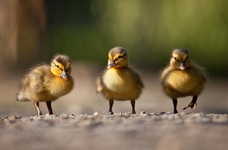 自然界最萌最讨喜的小动物近景系列照(高清组