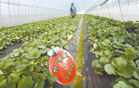 图文:武汉首批家庭农场生机盎然图片