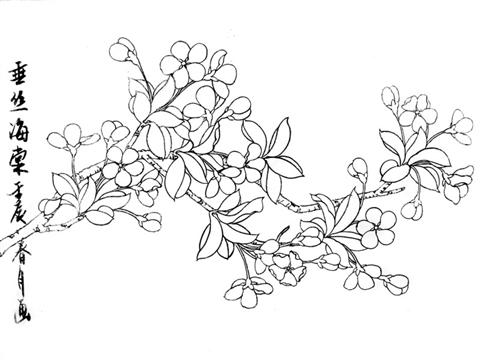 梅花的简笔画-工笔花卉 垂丝海棠 的设色方法