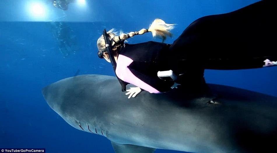 美国女子海底骑鲨鱼遨游 称如同骑马【组图】
