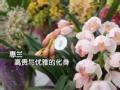 京城年味浓之年宵花