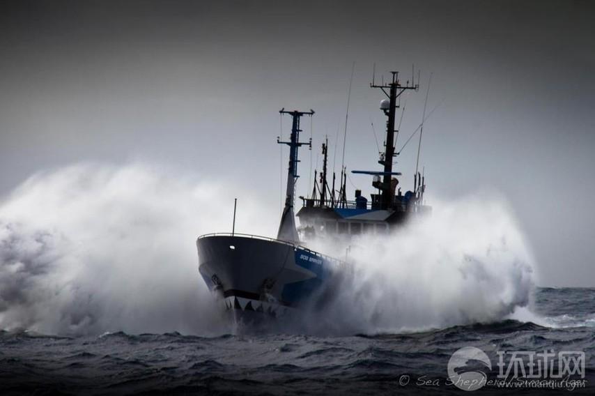 反捕鲸船遭日本军舰